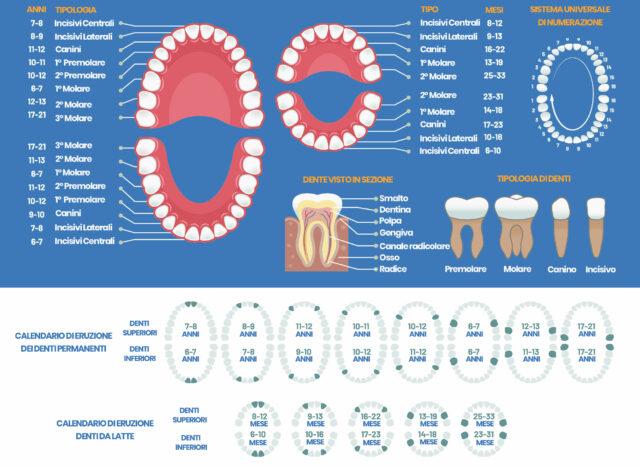 tabella dei denti: quanti sono e quando spuntano